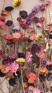 -black-shed-dried-flowers-dahlias.jpg