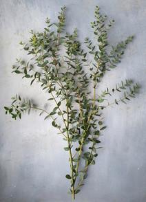 black-shed-eucalyptus-9.jpeg
