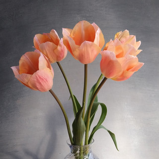 apricot-dream-tulips-black-shed.jpg