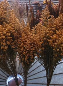 solidago-black-shed-dried-flowers.jpg
