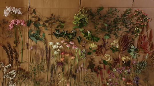 october-flowers-black-shed.jpg