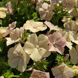 creme-caramel-black-shed-flowers.1.jpg