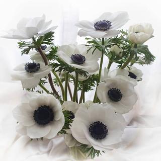 white-anemone-black-shed-flowers.jpg