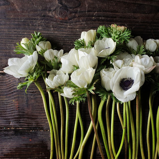 anemone-february-black-shed-flowers.jpg