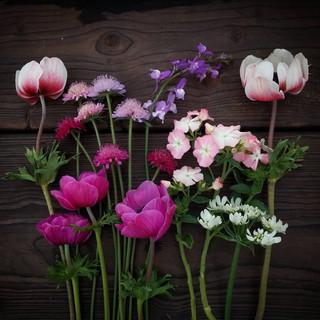 april-flowers-black-shed.jpg