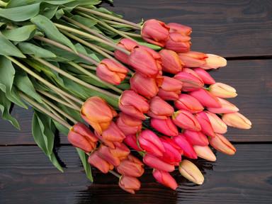 tulips-black-shed-flowers.jpg
