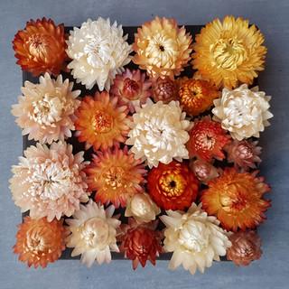 black-shed-dried-flowers-helichrysum-3.j