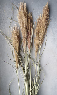 miscanthus-black-shed-dried-flowers.jpg