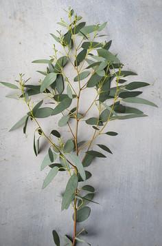 black-shed-eucalyptus-6.jpg