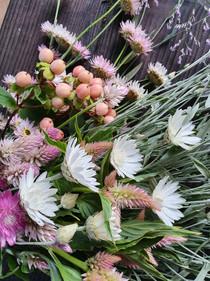 black-shed-flowers-xeranthemum.jpg