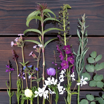 may-flowers-black-shed-2.jpg