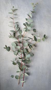 black-shed-eucalyptus-4.jpg
