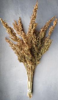 atriplex-black-shed-dried-flowers.jpg