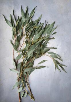 black-shed-eucalyptus-8.jpeg
