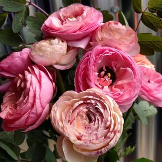 pink-ranunculus-black-shed-flowers.jpg
