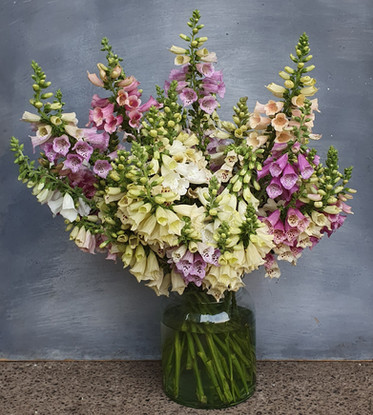 foxglove-arrangement-black-shed-flowers.