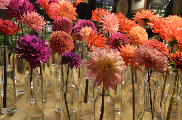 single-stem-dalias-black-shed-flowers.jp