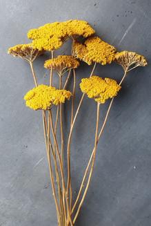 gold-achillea-black-shed-dried-flowers.j