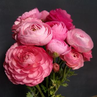 rose-ranunculus-black-shed-flowers.jpg