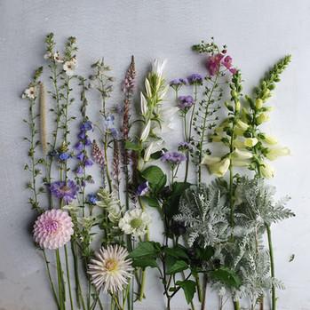 september-flowers-black-shed.jpg