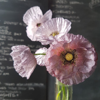 cedric-morris-poppies-black-shed-flowers