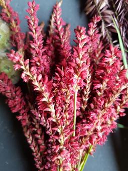 persicaria-black-shed-flowers.jpg