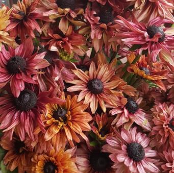 rudbeckia-black-shed-flowers.jpg