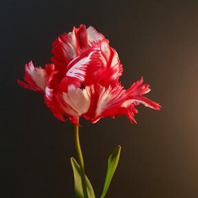 estelle-rijnveld-black-shed-tulips.jpg