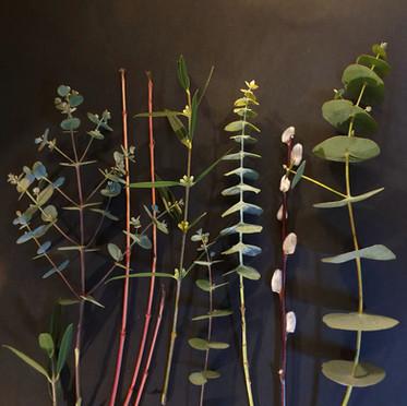 eucalyptus-black-shed-flowers.jpg