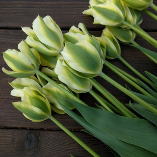 spring-green-tulips-black-shed-flowers-b