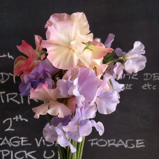 sweet-peas-black-shed-flowers.jpg