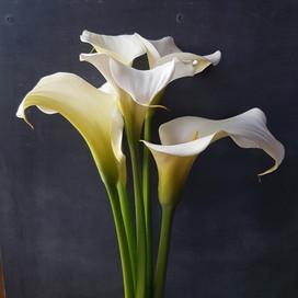 arum-lily-black-shed-flowers.jpg