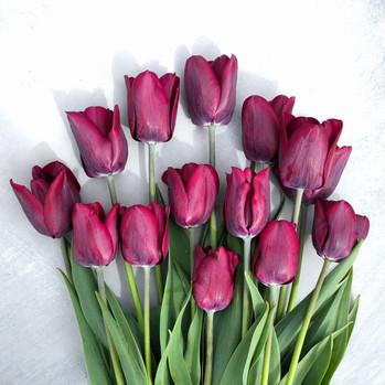 purple-tulips-black-shed-flowers.jpg