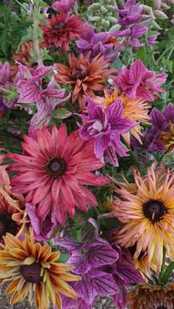 rudbeckia-salvia-black-shed-flowers.jpg
