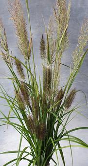 september-grasses-black-shed-flowers.jpg