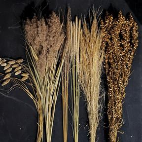 black-shed-dried-grasses.jpg