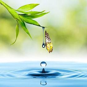 23553433-papillon-avec-des-feuilles-vert