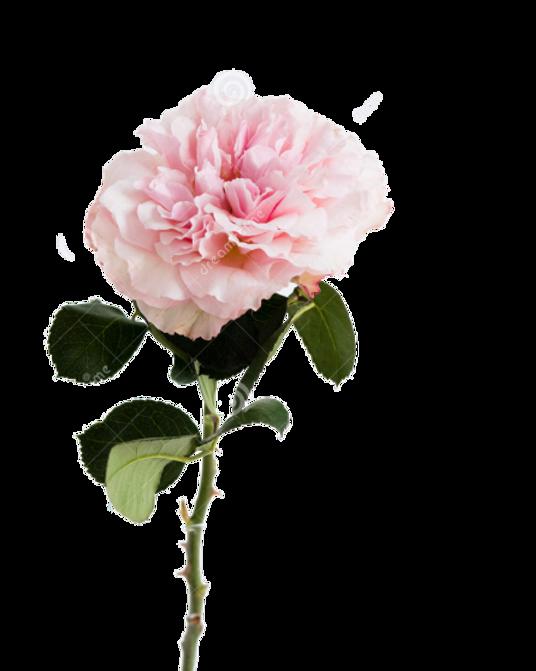 garden-rose-green-stalk-clear-small-vase
