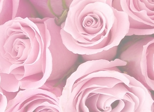 bright-pink-roses-facebook-cover-timelin
