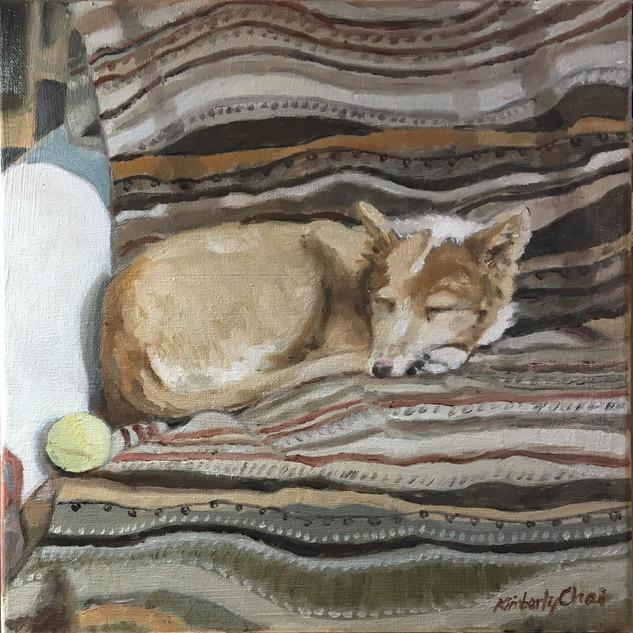 Caretaker's Dog