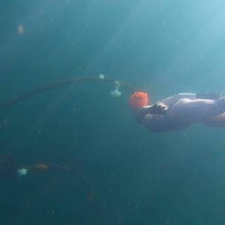 Exploring Edmonds Underwater Dive Park, WA