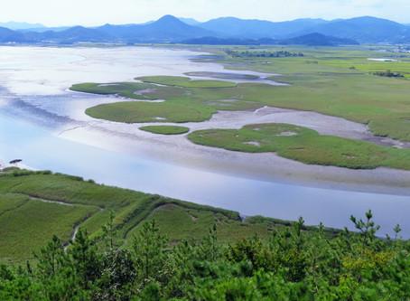 La baie de Suncheon, marais côtier enchanteur