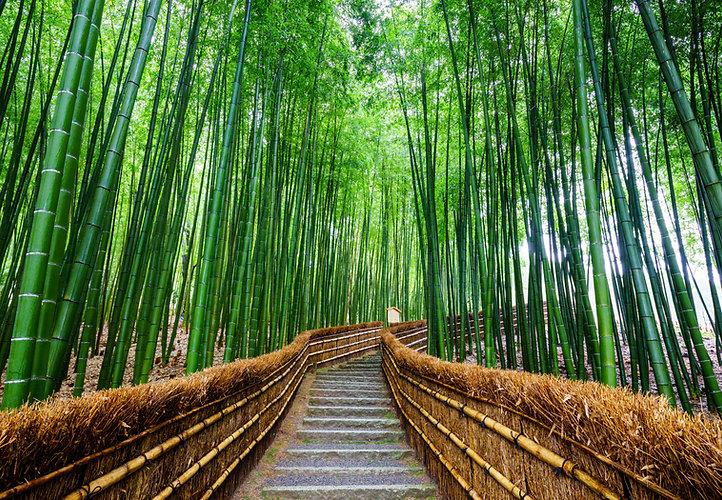 bamboo alley.jpg
