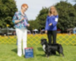 adopt, pup, national, international champion, show dog