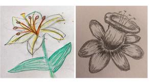 Sketch Club (Week 51) - Summer Flower