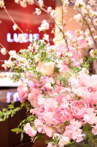 桜162_s.jpg