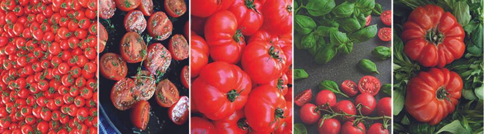 frise tomate.jpg