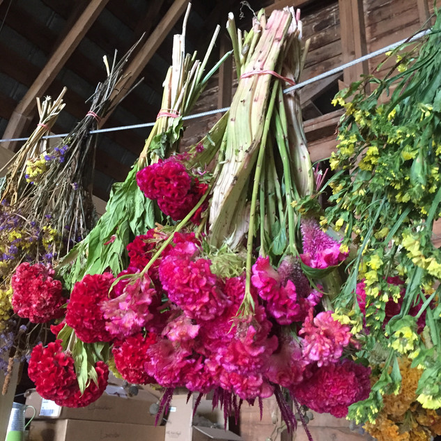 flowers hanging to dry