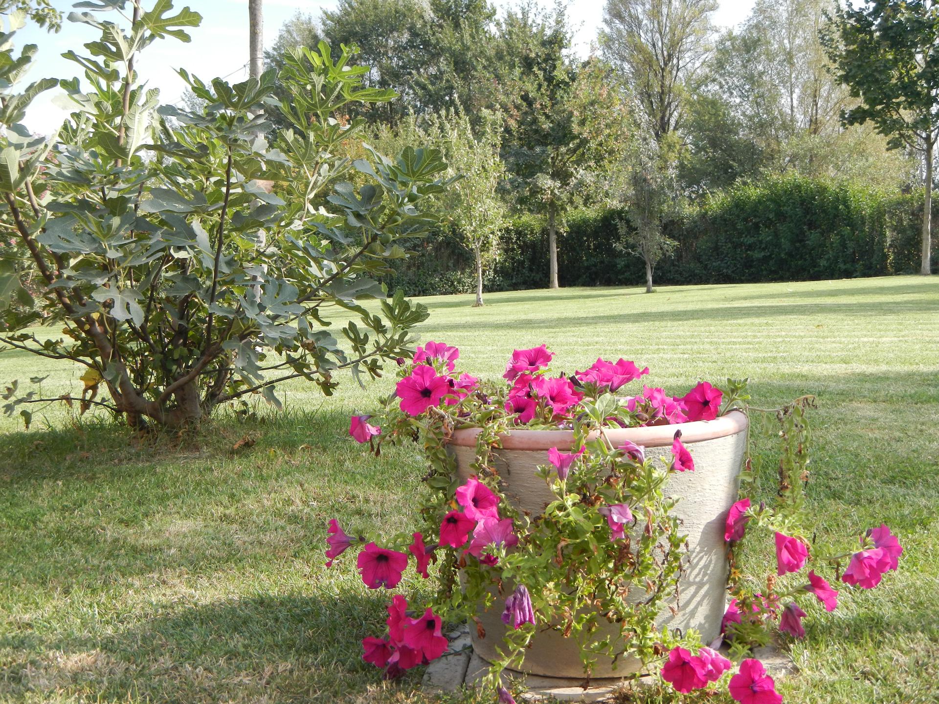 bed & breakfast con giardino