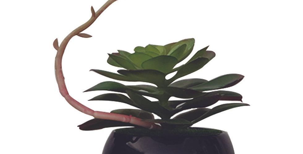 Suculenta en base de cerámica negra